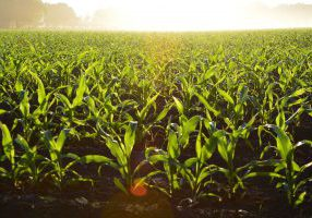 Growers For Biotechnology